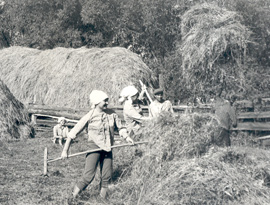 Школьники на заготовке кормов, Геральда - на первом плане. Село Киприно. 1954 год